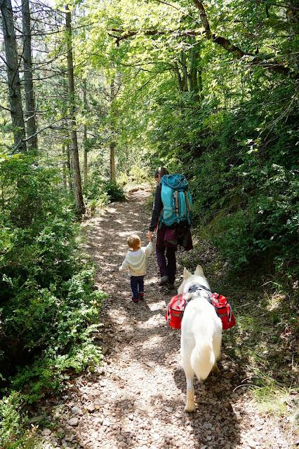 ballade dans la forêt avec un chien