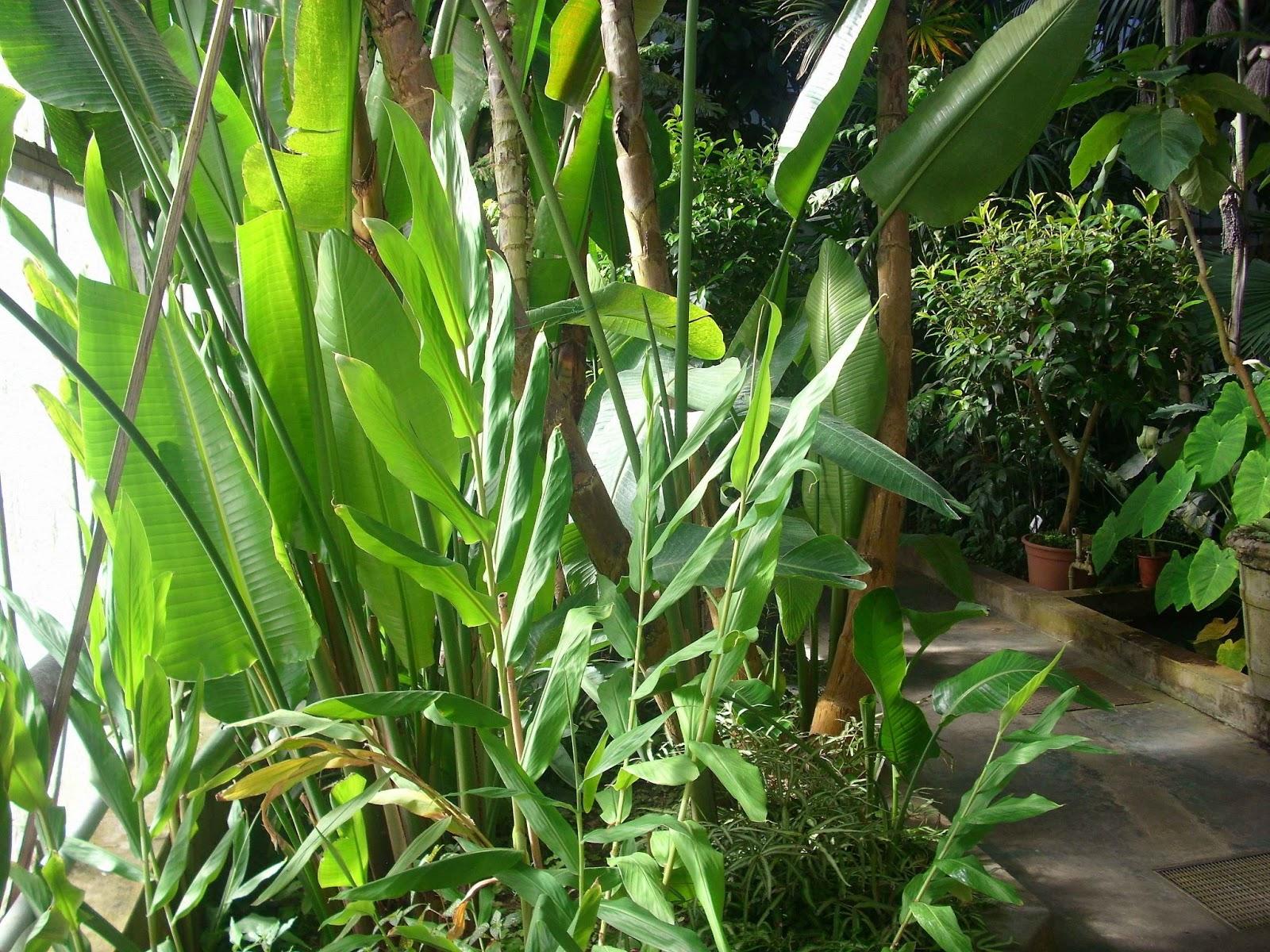 Piante da interno e da esterno nell 39 orto botanico di pavia for Piante grasse fiorite da esterno