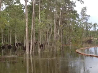 Sinkhole swallows tree in US state of Louisiana