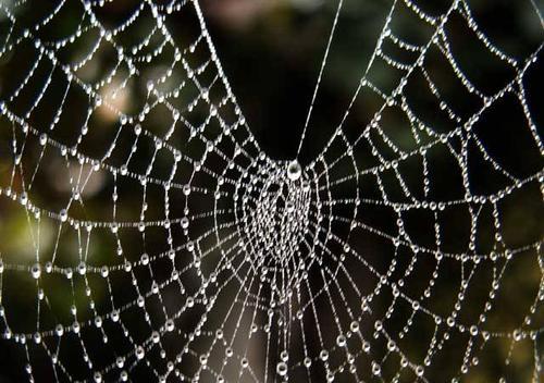 Super show digital las telas de ara as para hacer - Como hacer tela de arana ...