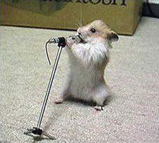Funny Picture of Animals : Animal Sing 1