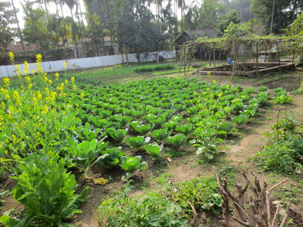 Kitchen Garden In India The Whimsy Bookworm A Book Blog From India Vignettes Kitchen