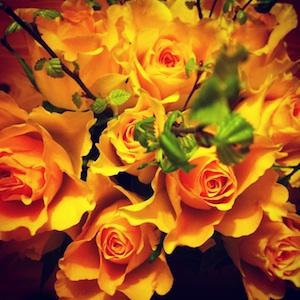 Kiitollisuuden ruusut