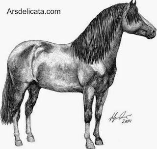imagenes-de-dibujos-de-caballos