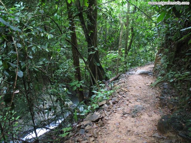 Raman Forest