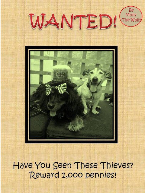 Molly The Wally Is A Wanted Dog!