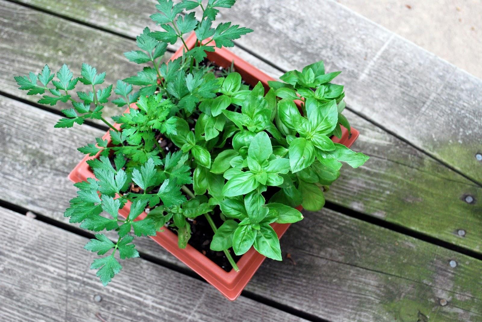Brujer a del cerco el arte de las brujas sencillo - Plantas para atraer el dinero ...