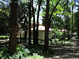 Instituto Biológico - Planeta Inseto