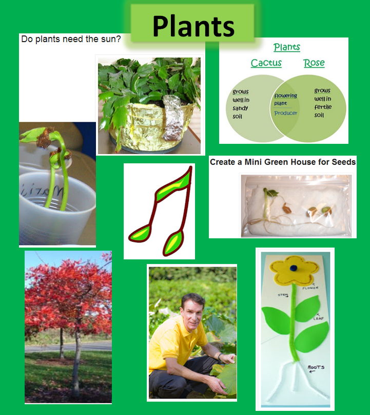 Learning Ideas - Grades K-8: Plant Ideas, Activities, and ...