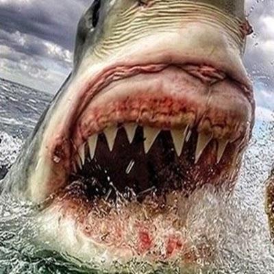 Os tubarões brancos que vivem nas águas sul-africanas chegam a ter seis metros de comprimento e 300 afiados dentes