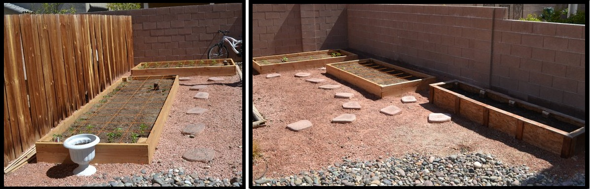 Square Foot Gardening in Las Vegas