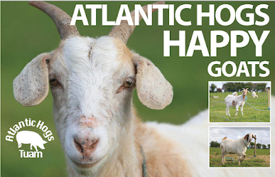 "Picture of white goat, reads ""Atlantic Hogs HAPPY Goats"""