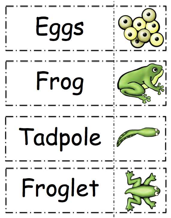 Rare image in life cycle of a frog printable