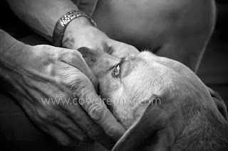 Dog with man's hands holding his face