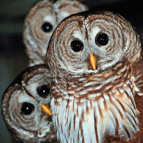 The Owls' Nest