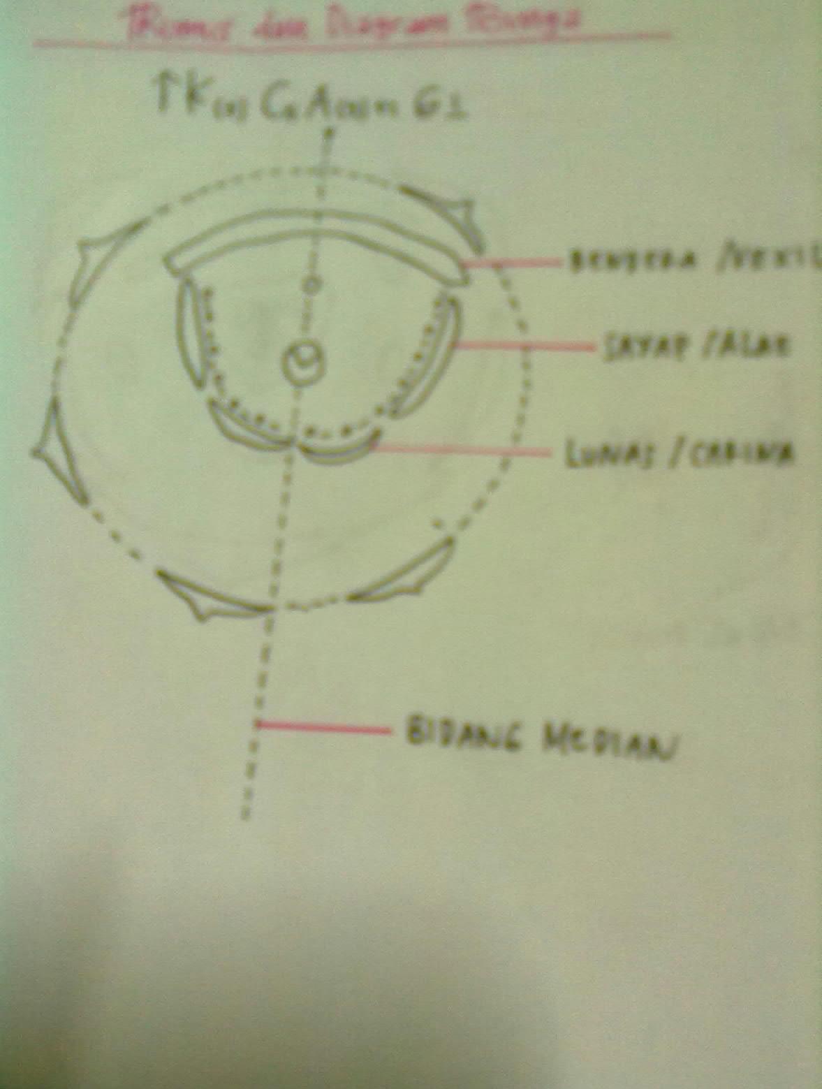 Its me diagram bunga dadap ccuart Gallery