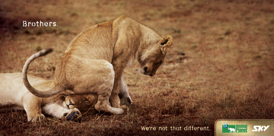 Funny And Creative Ads Using Animals
