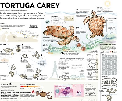 Chocolates hershey\'s: Tortuga Carey!!!!