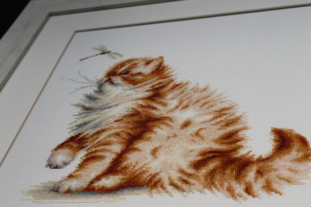 Luca-S вышивка кот
