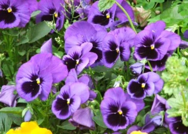 Il blog di dilloconunfiore - Fiori da giardino autunnali ...
