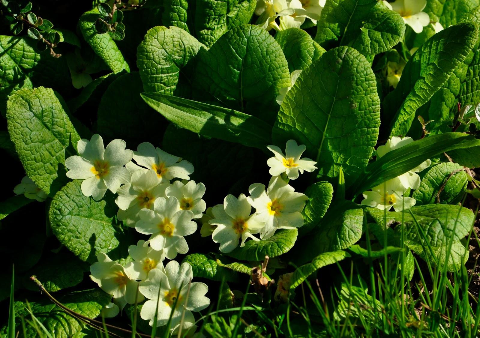 Jardin de la sauvagine protection des rocailles fleurs for Fleurs au jardin
