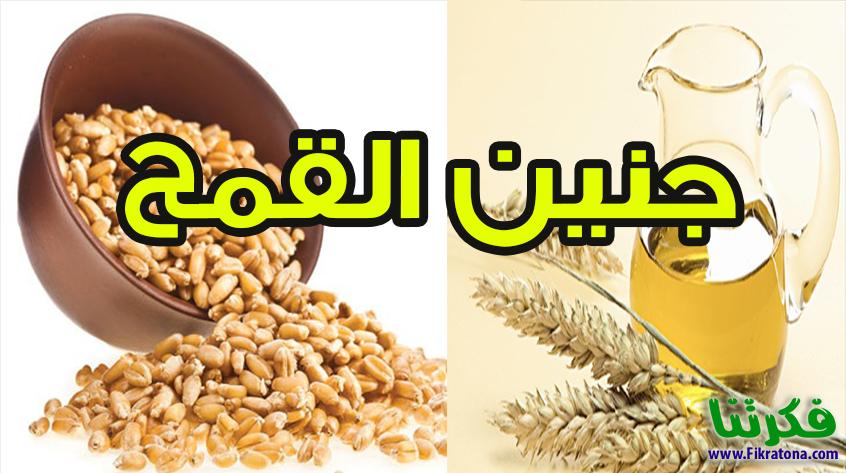 Image result for صور عن فوائد جنين القمح