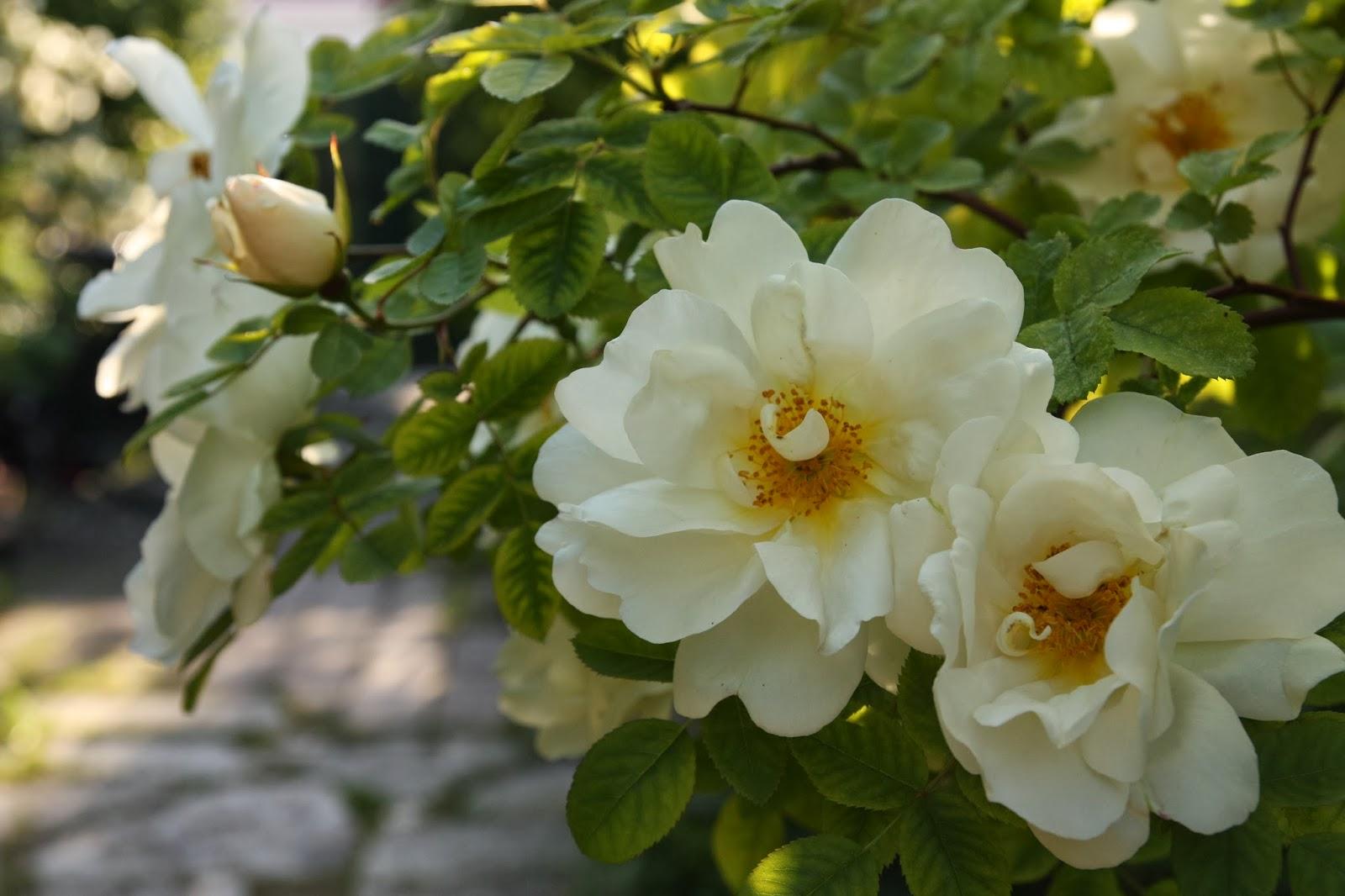 Kärleksstigen: min trädgård 2014