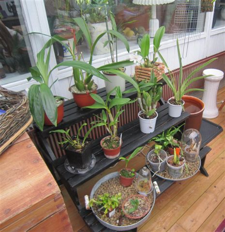 Vild med orkideer: udestue indrettet til orkieer
