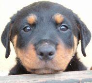 Fizioterápia kutyáknak