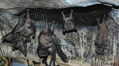 palo alto museum