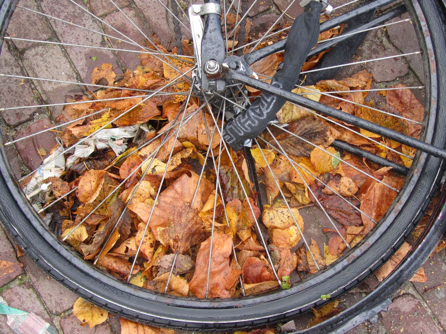 leaves under a bicycle wheel