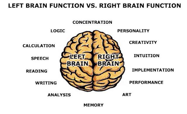 Brain Function6