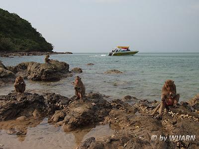 เกาะเกล็ดแก้ว, เกาะเป็ด, Monkey Island