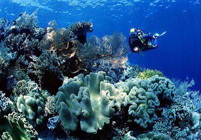 5 Daftar Tempat Wisata Di Wakatobi Yang Wajib Dikunjungi