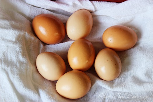 Fresh Eggs Photos by Tori Beveridge