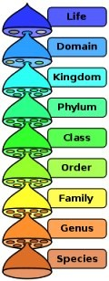 taxonomy categories