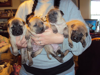 An Arm Full of Thai Ridgeback pups, TRDS