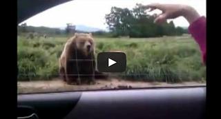 Teen Quotes: Bear Attacks A Man (Video)