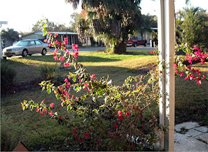 Florida 28 December