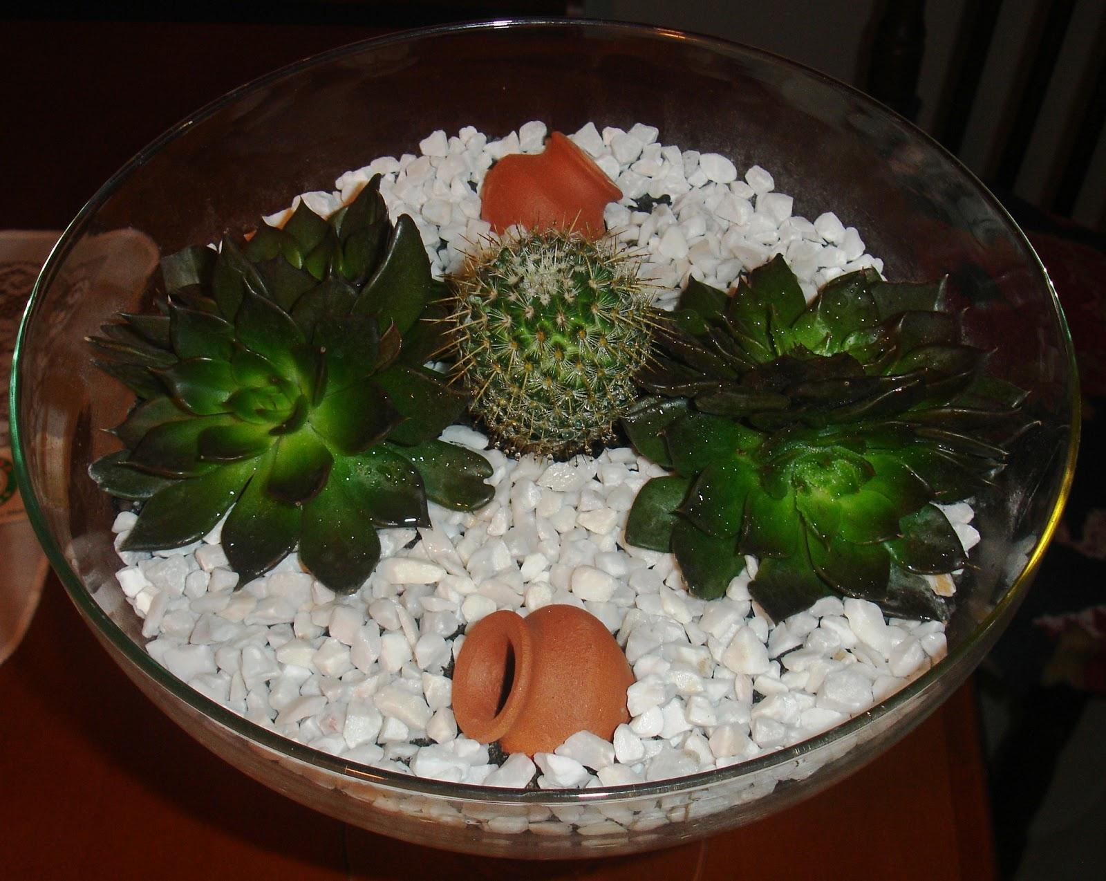 mini jardim suculentas:Inovando com Cactos e Suculentas.: Mini Jardim de Cacto e Suculentas.