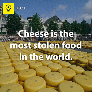 cheese facts , Cheese is the most stolen food in the world.
