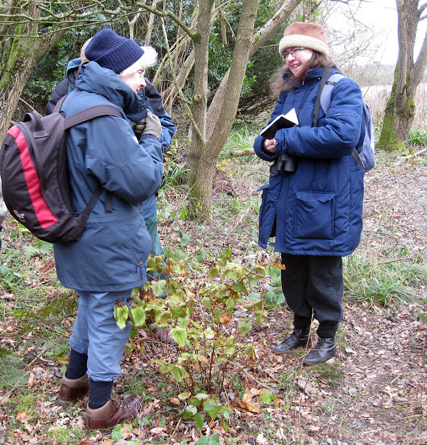 Some of the group examining a Tutsan, Hypericum androsaemum. 18 February 2012.