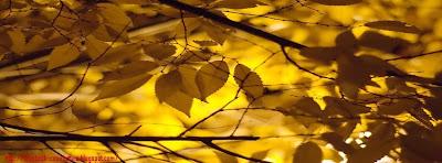 Couverture facebook feuilles d'automne 5