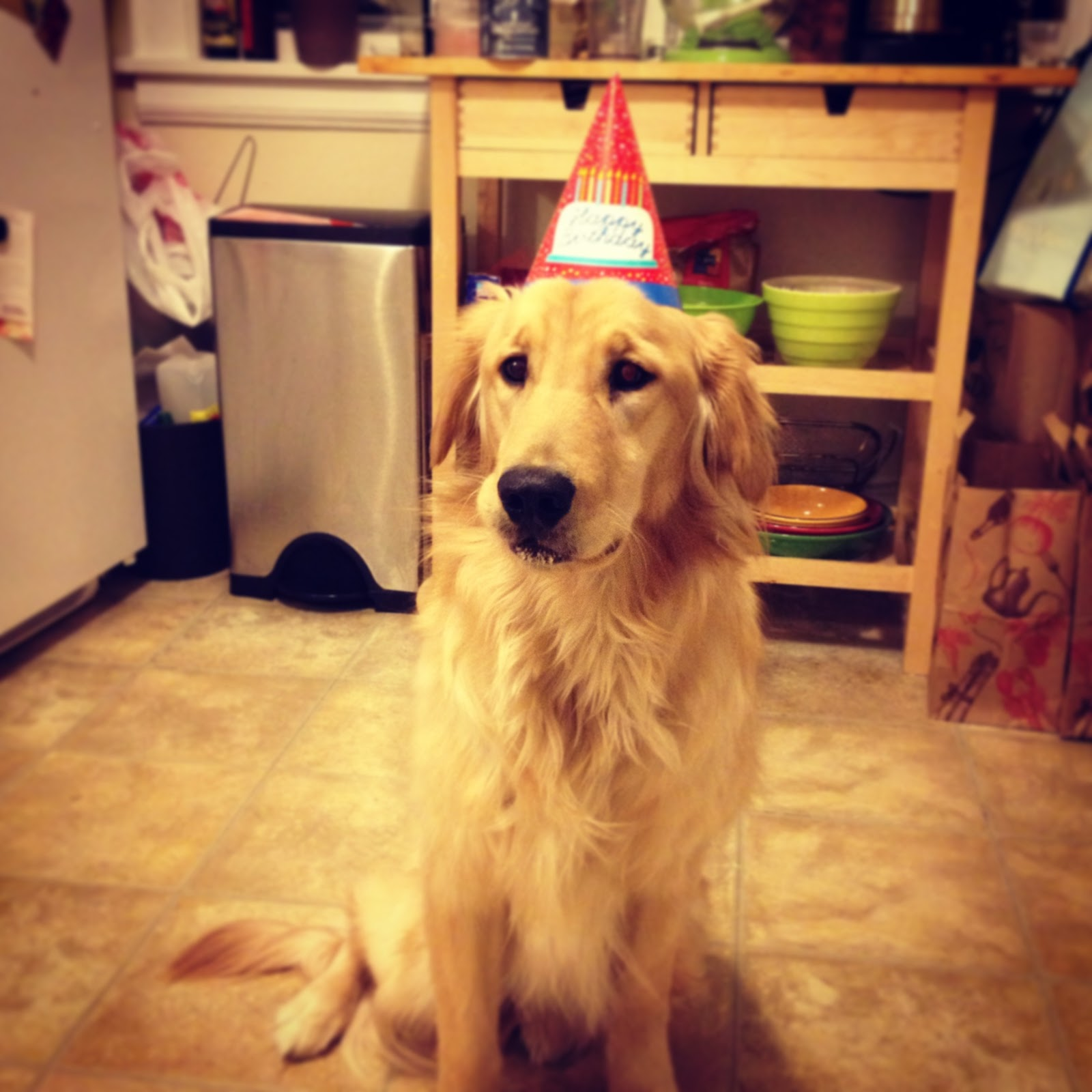 Friday Was Maddies 1st Birthday So Like Any Proud Puppy Mama I Bought Party Hats Made Her A Cake And Had For
