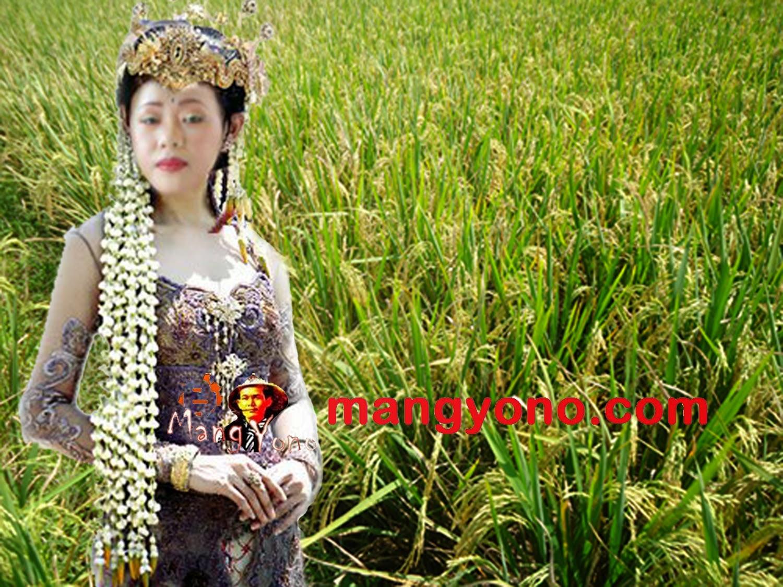 Cerita Legenda Dewi Padi / Dewi Sri Di Jawa Barat