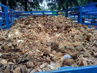 tempurung kelapa yang dihantar untuk memproses arang di Perak
