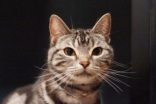I know i'm cute kitty :3 - cutipedia