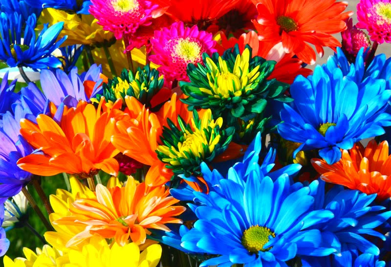 rainbow flowers wallpaper paintings - photo #39