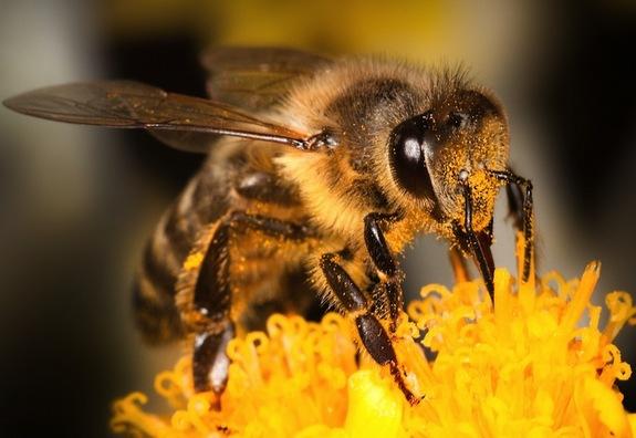 bee-flower-130810.jpg