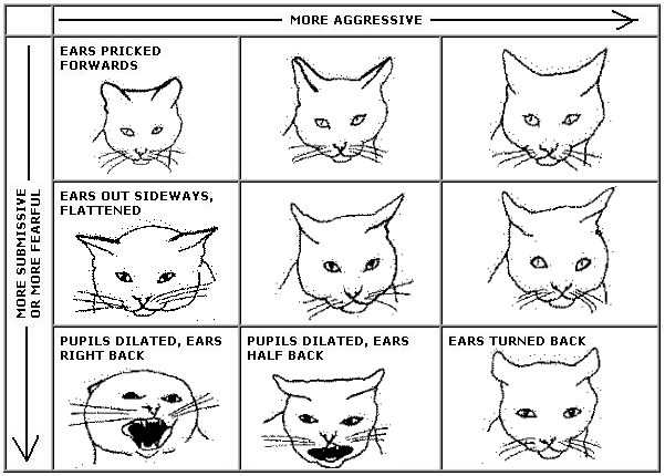 Cat facial expression chart | Exclusively Cats Veterinary Hospital, Waterford, MI